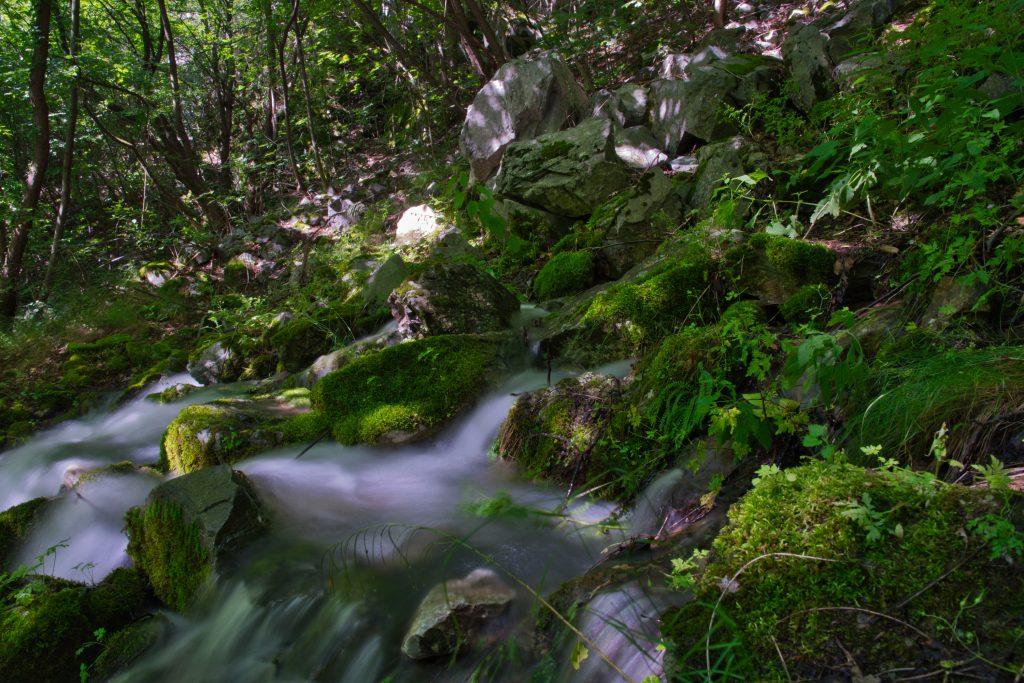 Еко-пътека Бачково - изворът